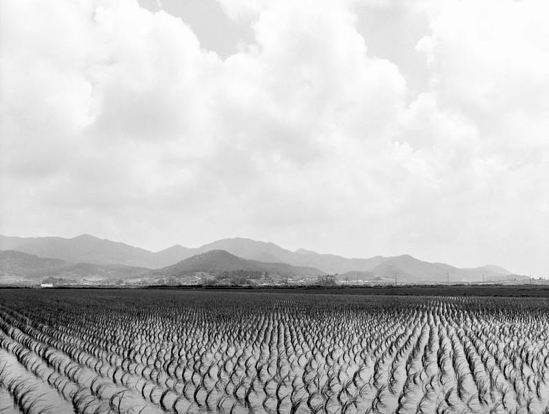 Farmland of Younggwang (영광)