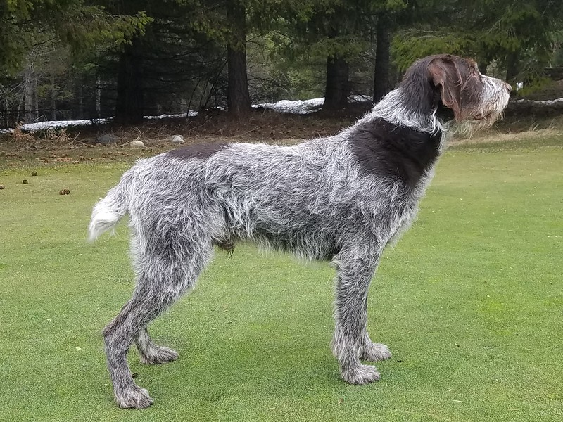 Sire: Ace of Wolf Fork Canyon