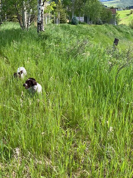 Bean and Brida exploring