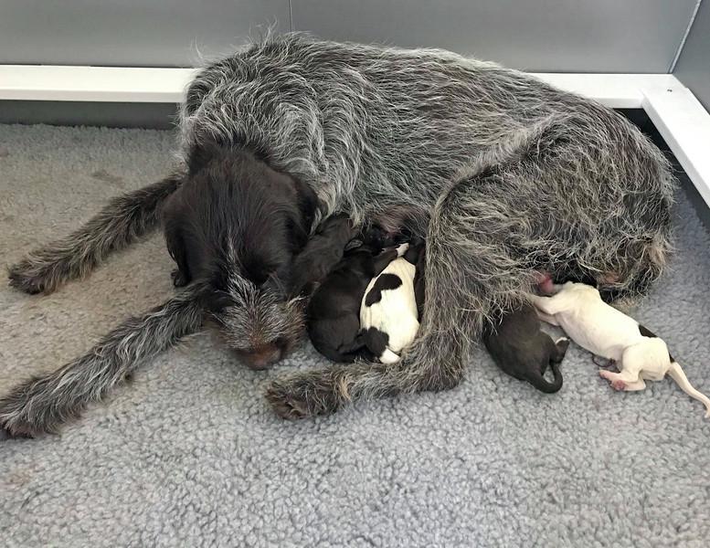 Arika and pups nursing