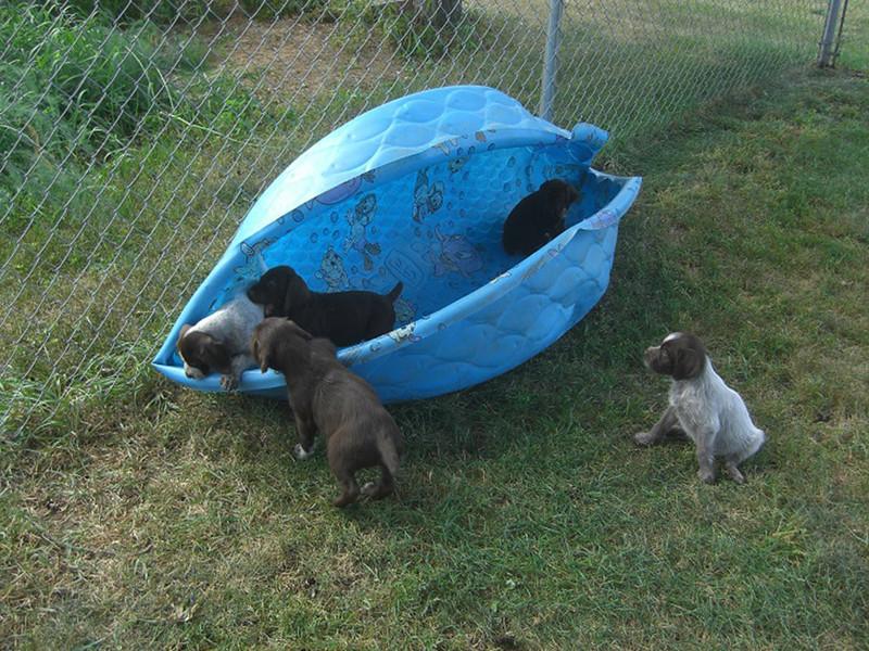 Poolside pups