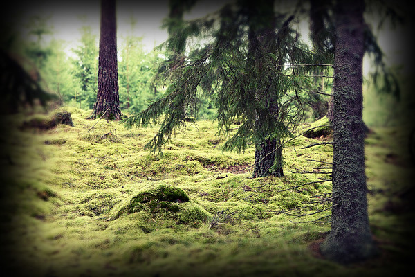 Sweden Sustainable Forestry (24 images)