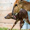 Baby Nyala-7171