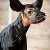 Baby Okapi Just Born!