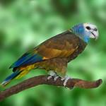 St. Vincent Amazon parrot hatches at Houston Zoo