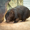 Wombat_Arrival-0054-5524
