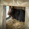 Wombat_Arrival-0021-5422