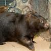 Wombat_Arrival-0045-5496