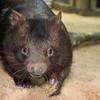 Wombat_Arrival-0058-5546