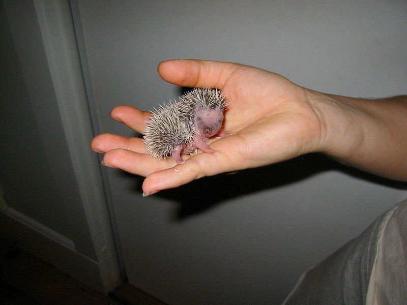 9 days old.