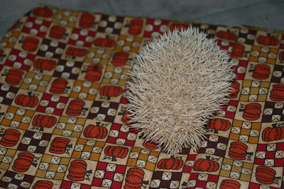 Litter - Travis and Belle (10/09/2004)  Litter - Travis and Belle (10/09/2004)  Filename reference: 20041105-023809-HAH-Hedgehog_Babies
