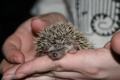 Litter - Froogle and ASCII (02/13/2005)  Litter - Froogle and ASCII (02/13/2005)  Filename reference: 20050307-001300-HAH-Hedgehog_Babies