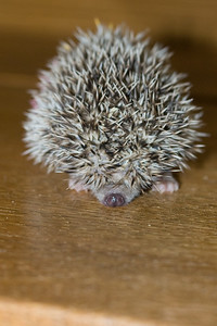 Reserved Babies (06/12/2007)  Hedgehog Babies Reserved for CM (06/12/2007)  Filename reference: 20070612-230240-HAH-Hedgehog_Babies