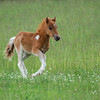Spring Gallop