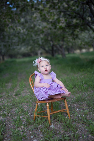 orchard-24