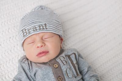 Baby Brant