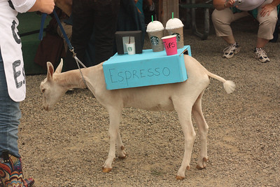 Barista Goat at the Goat Costume Contest