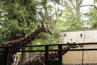 We love the giraffes