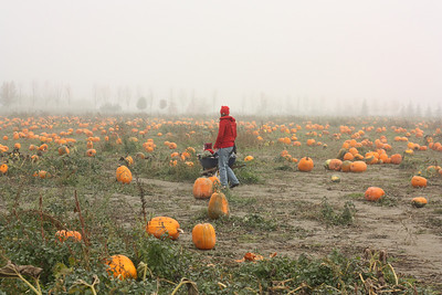A spooky foggy day at the pumpkin patch with our preschool friends!
