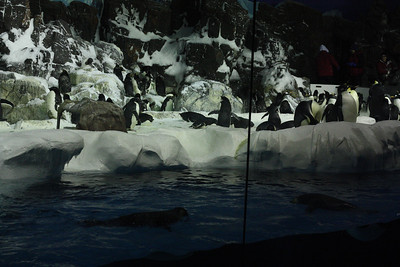 Penguins at seaworld