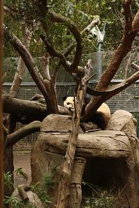 The panda shows his face!