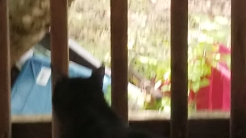 VIDEO......Sweety Girl pays no attention to anything, but Mama bird surely does !