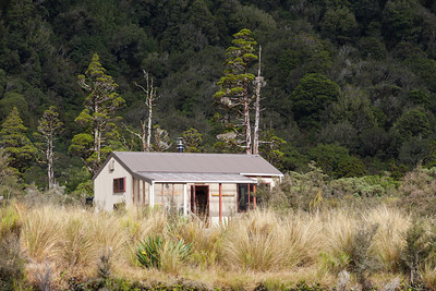 Grassy Flat Hut & Mountain Cedar Trees, Central Westland