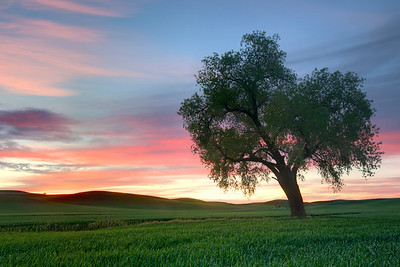 lone tree at sunset