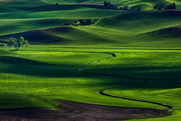 Palouse hills - lone tree