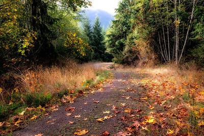 Gravel road near Joyce, Washington