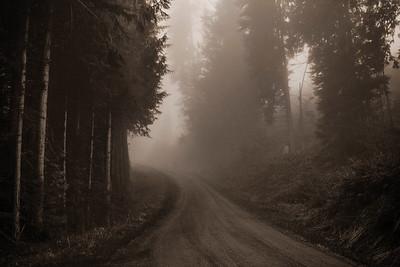 Evening fog, mountain logging road near Joyce, WA