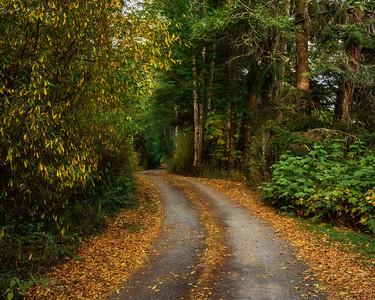 Gravel road near Joyce, WA