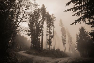 Logging road in fog near Joyce, WA