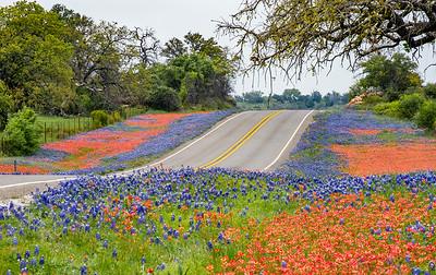 Spring wildflowers, Hwy 16 near Llano, Texas