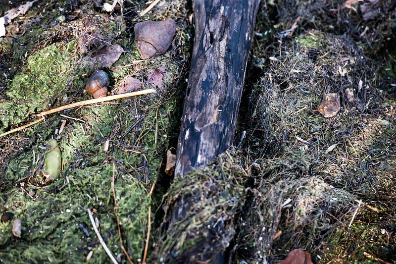 Snails at Dyke Marsh