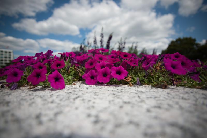 DC Flowers