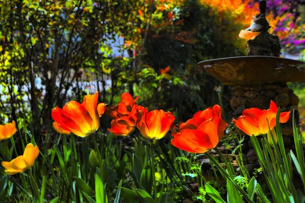 Springtime in Sutter Creek ~ March 29 2016