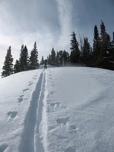 Skin track, backcountry skiing Lamb's canyon Utah.