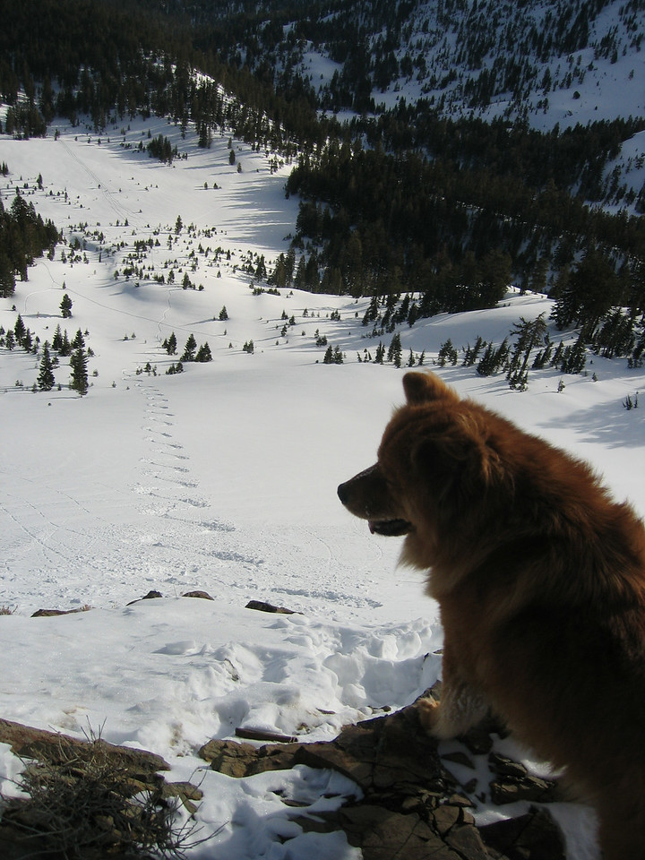 Here is Mingus drooling over the turns he's about to make.