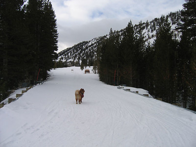 The trail for most of the  way is groomed for the Rock Creek Lodge, who sends snowmobiles to pick their customers up.   http://www.rockcreeklodge.com