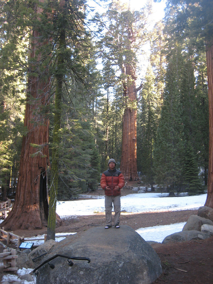 "Saturday:<br /> <br /> Woke up at 7, and drove another hour to the trailhead.  The Pear Lake trailhead (wolverton) is right next to the ""world's largest known single organism by volume.""   The General Sherman.  So we took the 1/4 mile walk to greet him.<br /> <br /> <br /> <a href=""http://en.wikipedia.org/wiki/Largest_organisms"">http://en.wikipedia.org/wiki/Largest_organisms</a>"