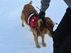 Nick schmoozing with the ski patrol...