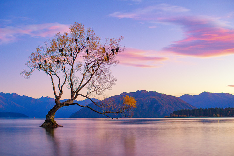 That Wanaka Tree