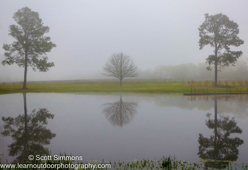 A Foggy Morning with Three Trees