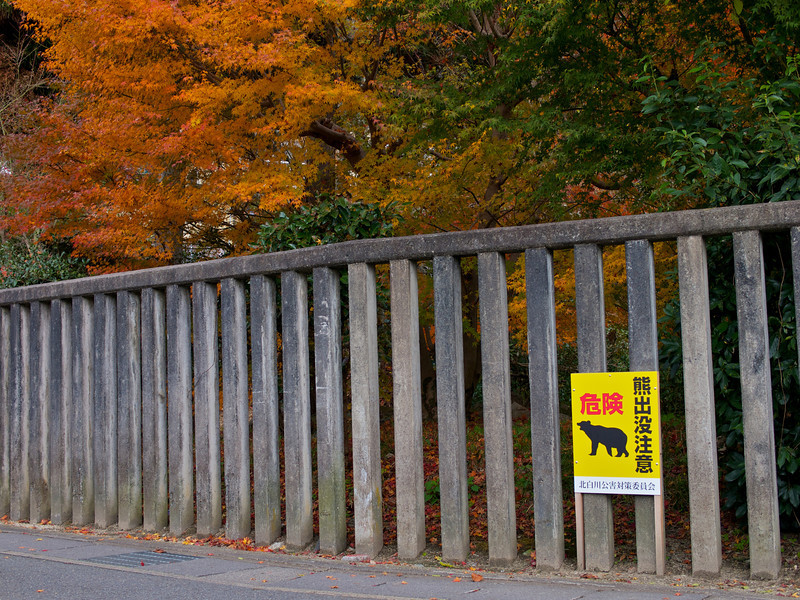 Watch out for bears, in Kyoto (I have never seen any ;)