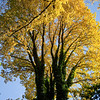 Bright-Autumn-Tree