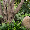 Rock and Tree in Jungle