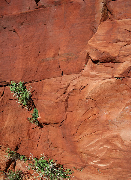 Red Rock-02