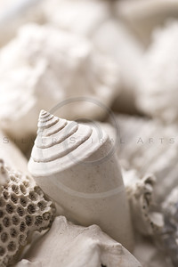 fossilized shell background