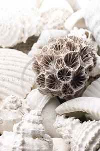 fossilized seashell background